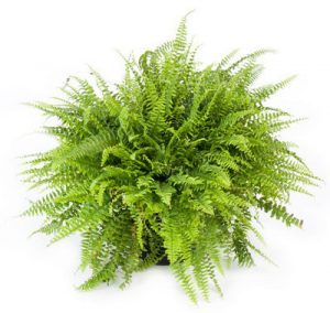 ExpoEase plants