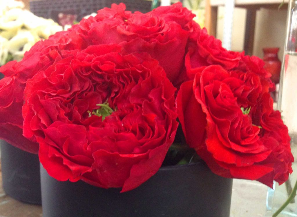 Red full flowers add color to your event.